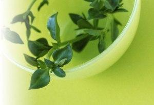 Ayurveda-herbal